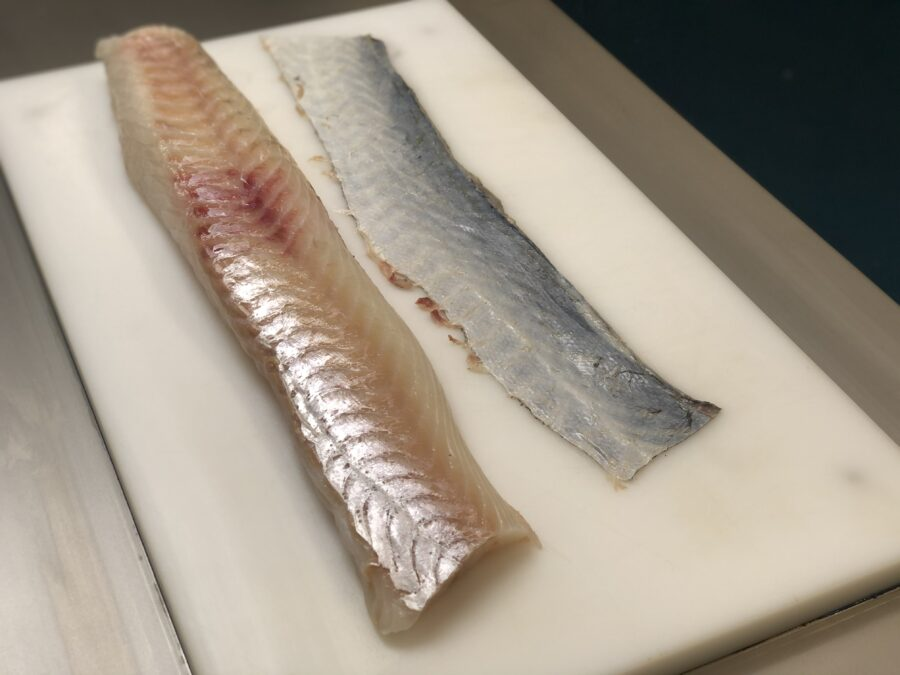 skinned cod fillet & skin - ST111V Manual tabletop skinning machine