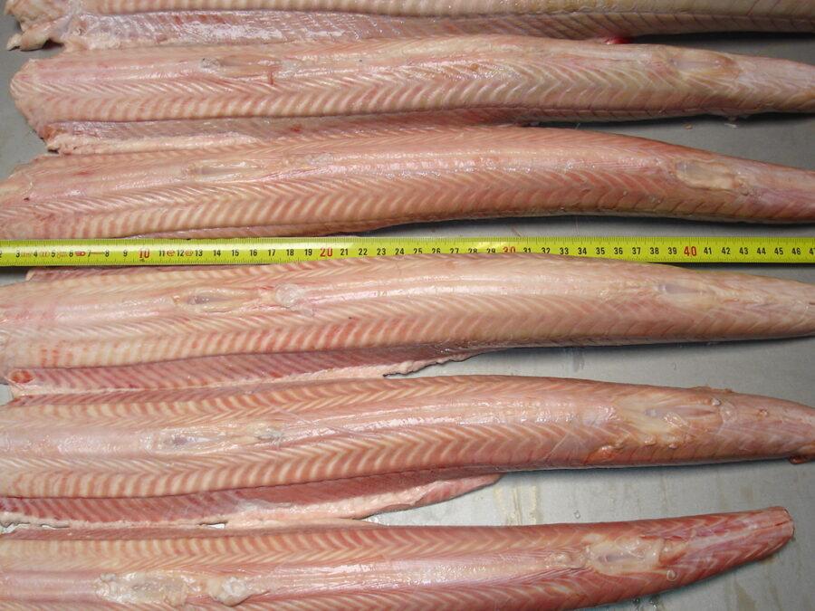 Free standing fish skinner - Skinned dogfish parts