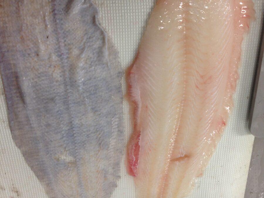 Free standing fish skinner - Skinned plaice fillet